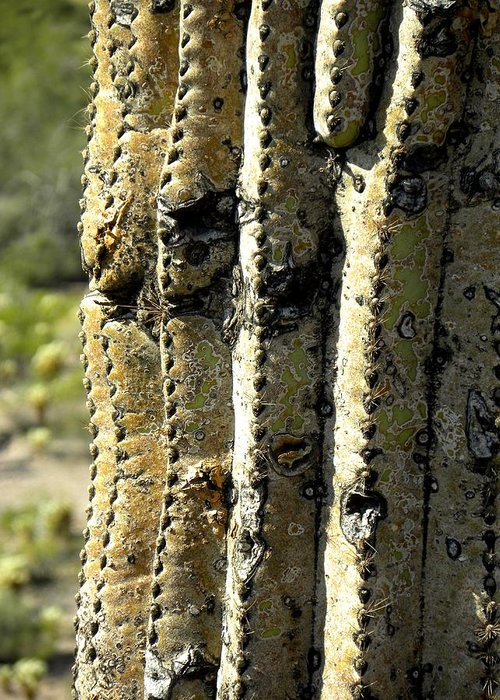Photograph On Paper Greeting Card featuring the photograph Desert Cactus 6 by Patricia Bigelow