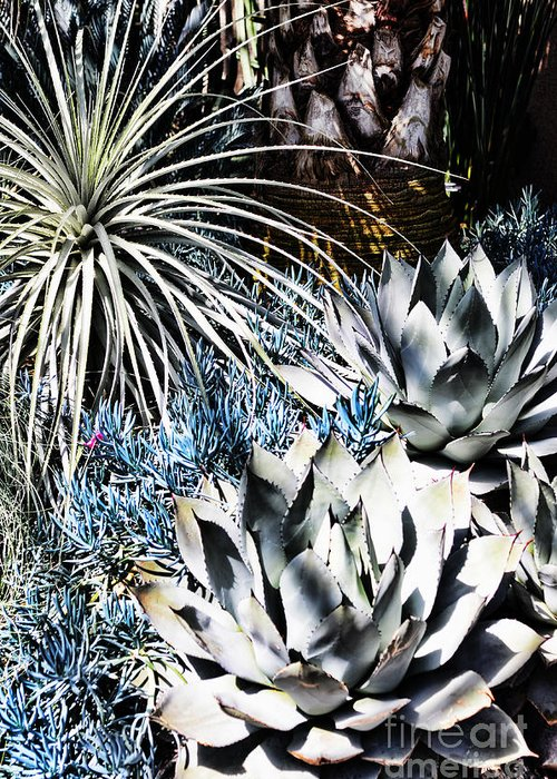 Succulent Greeting Card featuring the photograph Desert Garden by Judy Wolinsky