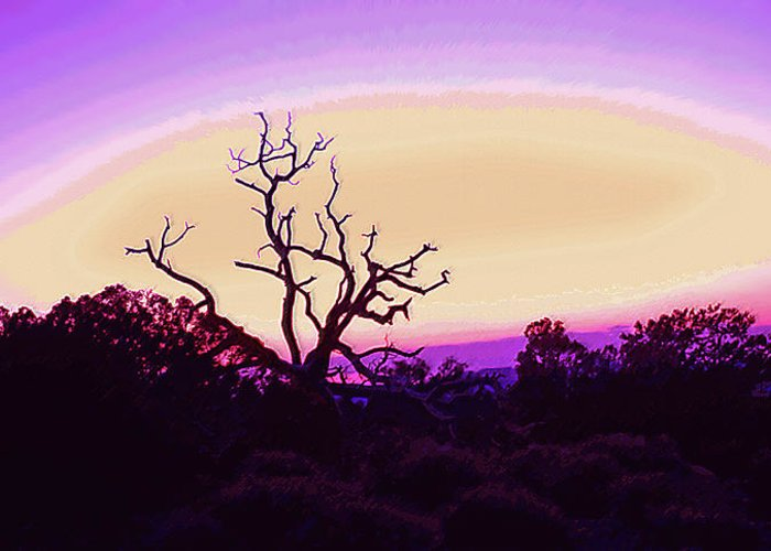 Desert Greeting Card featuring the photograph Desert Sunset With Silhouetted Tree 2 by Steve Ohlsen