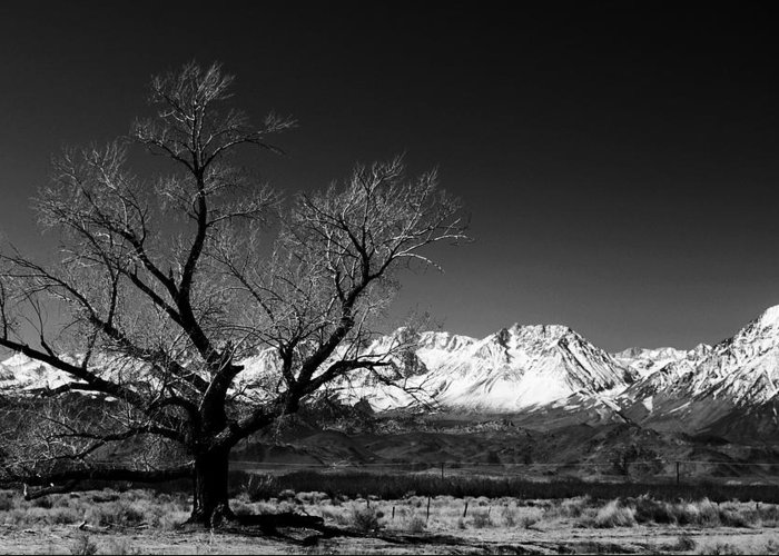 Black Adn White Greeting Card featuring the photograph Desolation by Jessica Roth