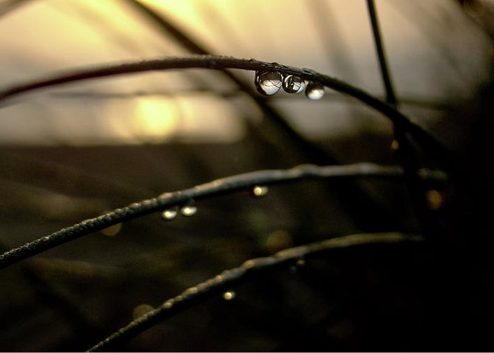 Blur Greeting Card featuring the photograph Dew Drops by MotionOne Studios
