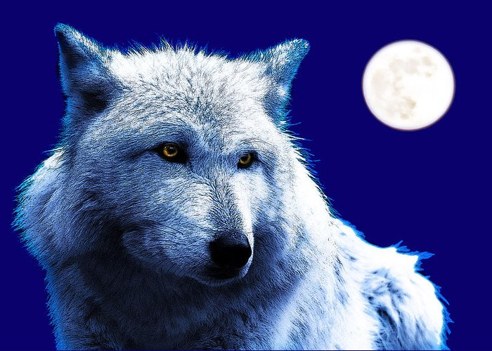 Digital Greeting Card featuring the photograph Digital Art Wolf Poster by Pierre Leclerc Photography