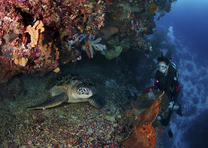 Diver Greeting Card featuring the photograph Diver And Sea Turtle, Manado, North by Mathieu Meur