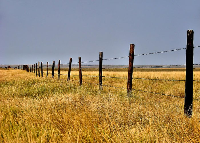 Fence Greeting Card featuring the photograph Dividing Line by Blair Wainman