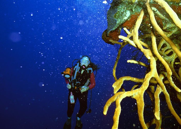 Dive Greeting Card featuring the photograph Diving The Wall At Little Cayman by Carl Purcell