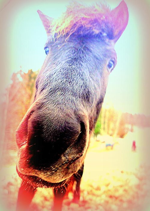 Horse Greeting Card featuring the photograph I Will Love You If You Really Love Me But Do You  by Hilde Widerberg