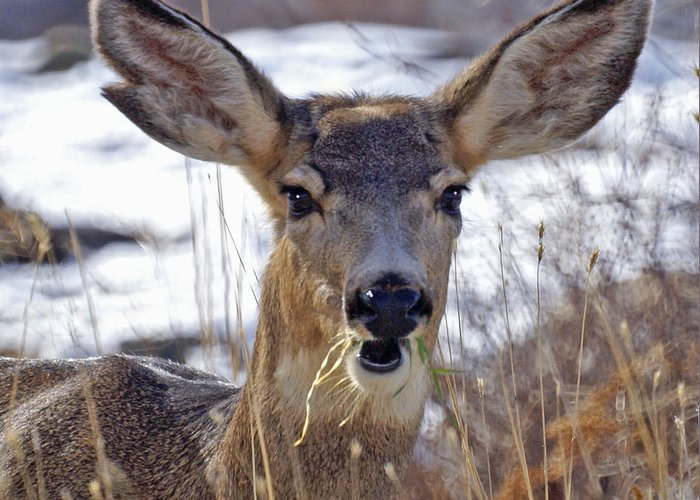 Doe Greeting Card featuring the photograph Doe by Heather Coen