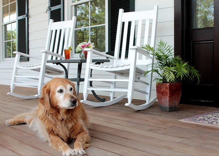 Dog Greeting Card featuring the photograph Dog Days Of Summer by Toni Hopper