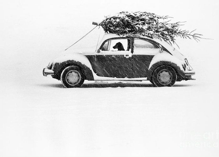 Animal Greeting Card featuring the photograph Dog In Car by Ulrike Welsch and Photo Researchers