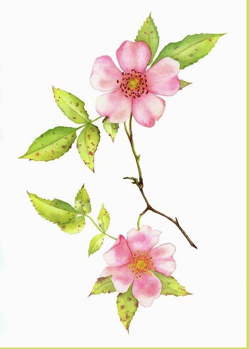 Bristly Rose Greeting Cards