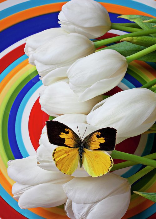 Dogface Butterfly Greeting Card featuring the photograph Dogface Butterfly On White Tulips by Garry Gay