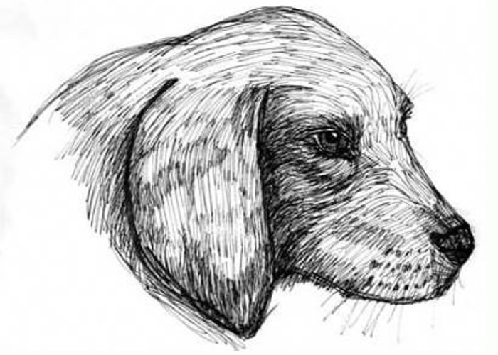 Head Of A Dog Greeting Card featuring the drawing Doggie by Caroline Lifshey