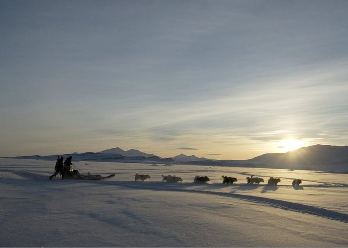 Snow Greeting Card featuring the photograph Dogsledge, Northern Greenland by Louise Murray