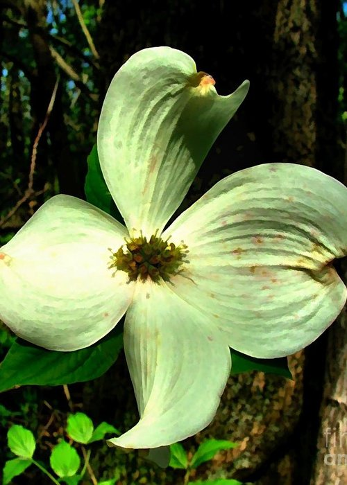 Dogwood Blossom Greeting Card featuring the photograph Dogwood Blossom I by Julie Dant