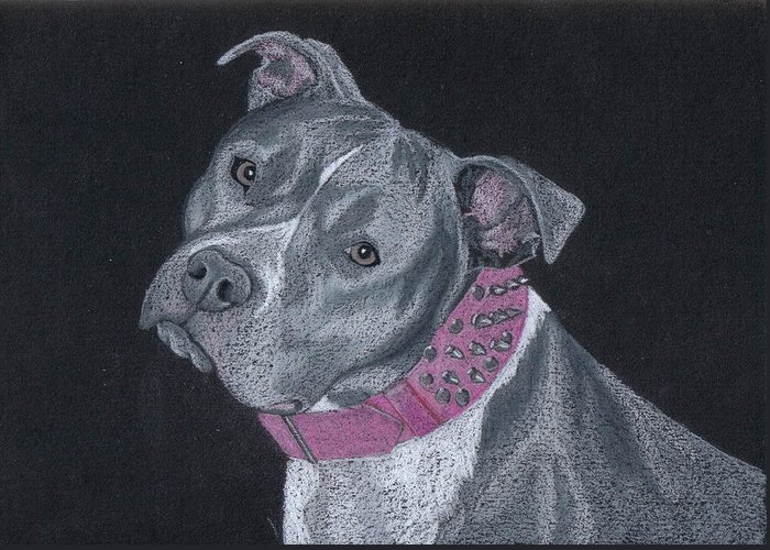 Pit Bull Greeting Card featuring the drawing Dolce by Stacey Jasmin