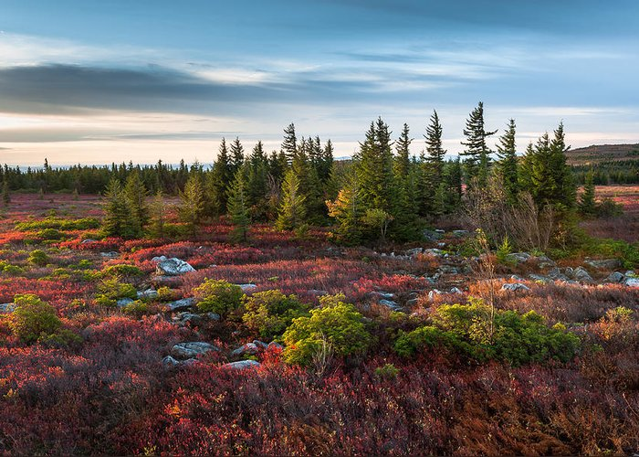 Dolly Sods Greeting Card featuring the photograph Dolly Sods Wilderness Area West Virginia by Mark VanDyke