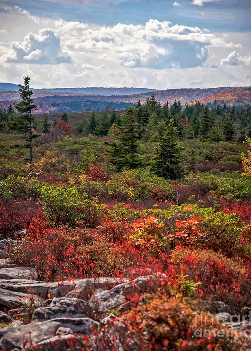 Bear Rocks Greeting Card featuring the photograph Dolly Sods Wilderness In Autumn 4273 by Cynthia Staley
