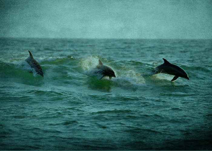 Dolphins Greeting Card featuring the photograph Dolphins by Sandy Keeton
