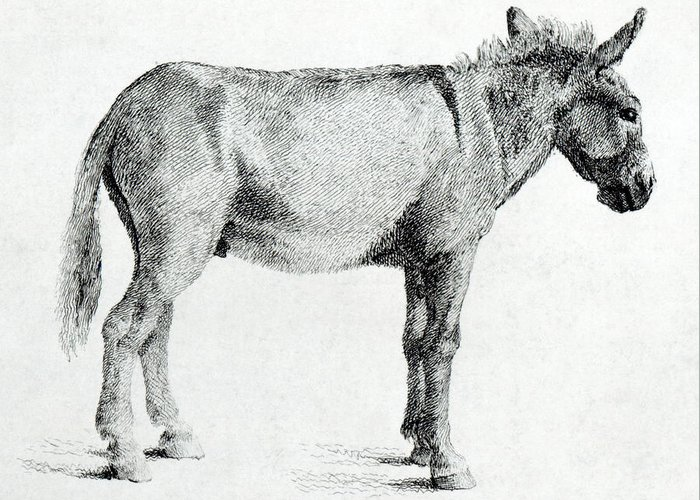 Donkey Drawings Greeting Cards