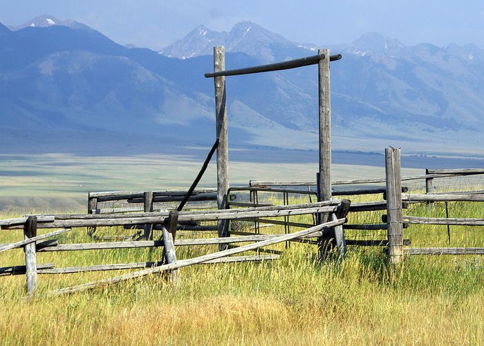 Mountains Greeting Card featuring the photograph Don't Fence Me In by Marty Koch