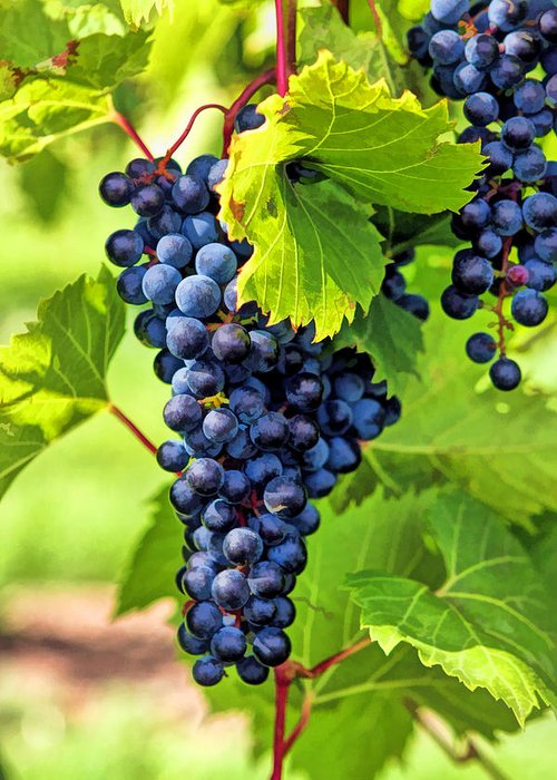 Grapes Greeting Card featuring the painting Door County Grape Cluster by Christopher Arndt