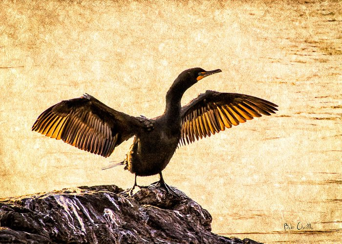 Double-crested Cormorant Greeting Cards