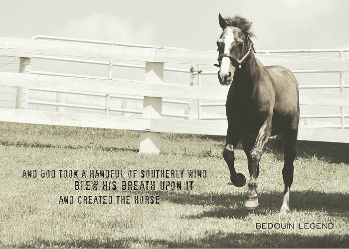 Horse Greeting Card featuring the photograph Down And Back Quote by JAMART Photography