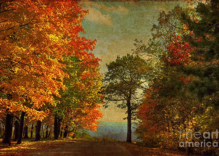Trees Greeting Card featuring the photograph Down The Mountain by Lois Bryan