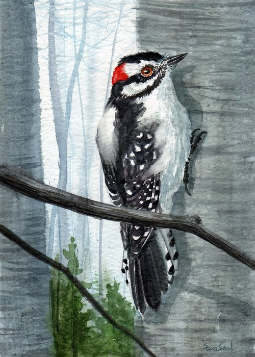 Birds Greeting Card featuring the painting Downey Woodpecker by Sean Seal