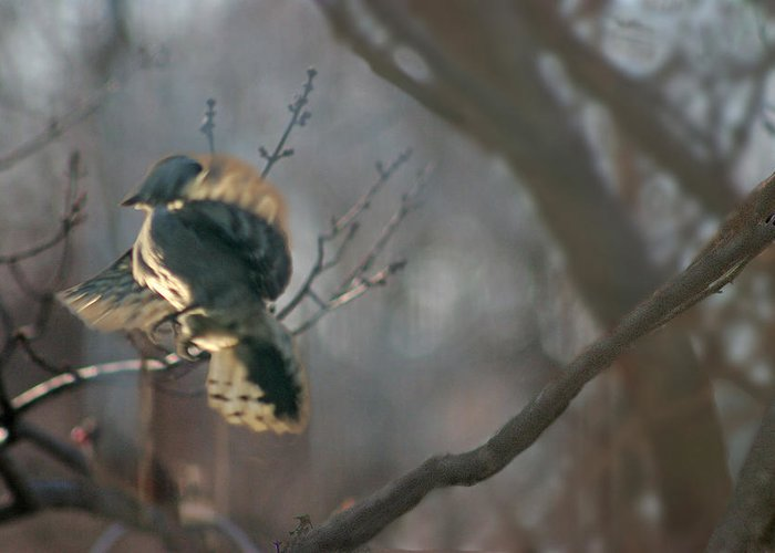 Nature Greeting Card featuring the photograph Downey Woodpecker by Steve Karol