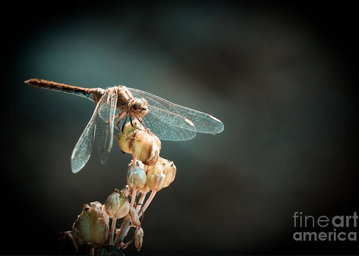 Dragonfly Greeting Card featuring the photograph Dragonfly by Gabriela Insuratelu