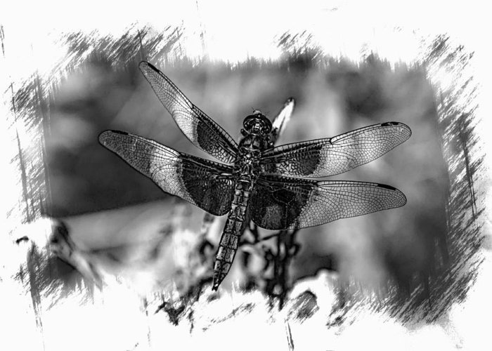 Dragon Fly Greeting Card featuring the photograph Dragonfly In Black And White by Lisa Hurylovich
