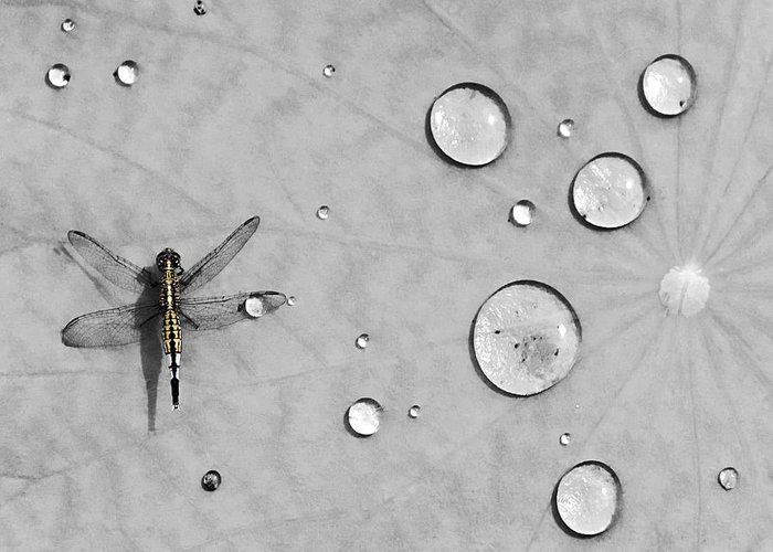 Dragonflies Stationery