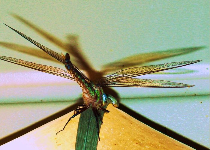 Aeronautics Wing. Greeting Card featuring the photograph Dragonfly by Nereida Slesarchik Cedeno Wilcoxon