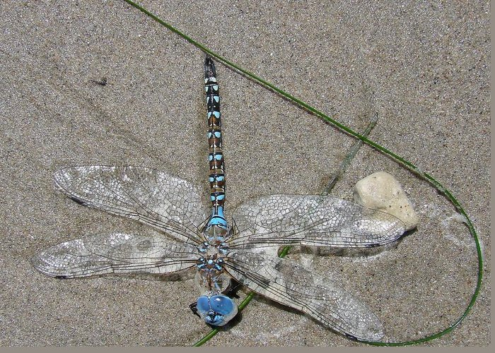 Dragonfly Greeting Card featuring the photograph Dragonfly On The Beach by Liz Vernand