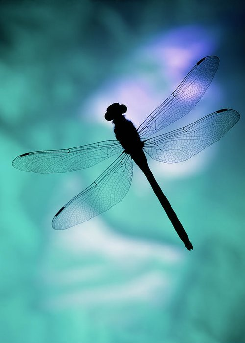 Dragonfly Silhouette Photograph By Mike E Miller Free vector silhouettes for commercial use in.svg and.png format with a transparent background. dragonfly silhouette by mike e miller
