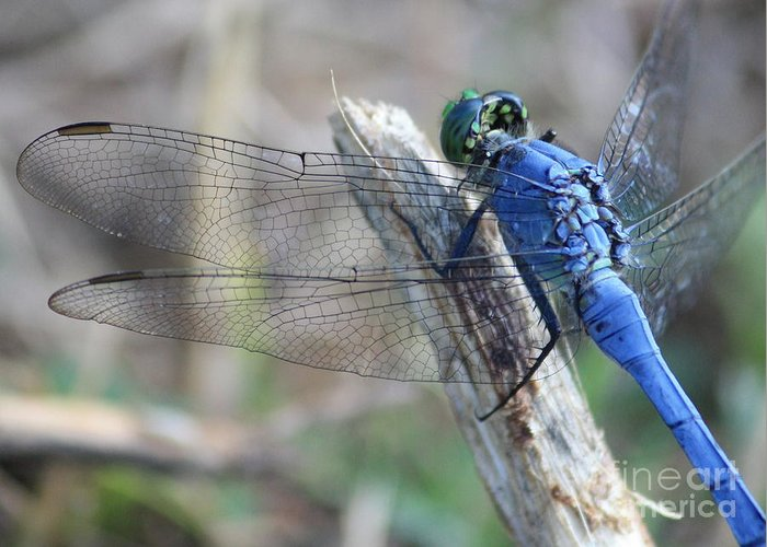 Dragonfly Greeting Card featuring the photograph Dragonfly Wing Detail by Carol Groenen