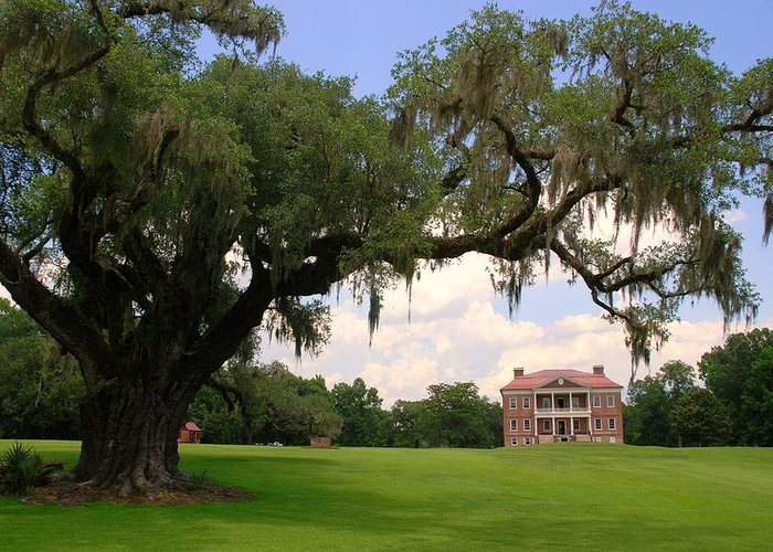 Photography Greeting Card featuring the photograph Drayton Hall Plantation Charleston by Susanne Van Hulst