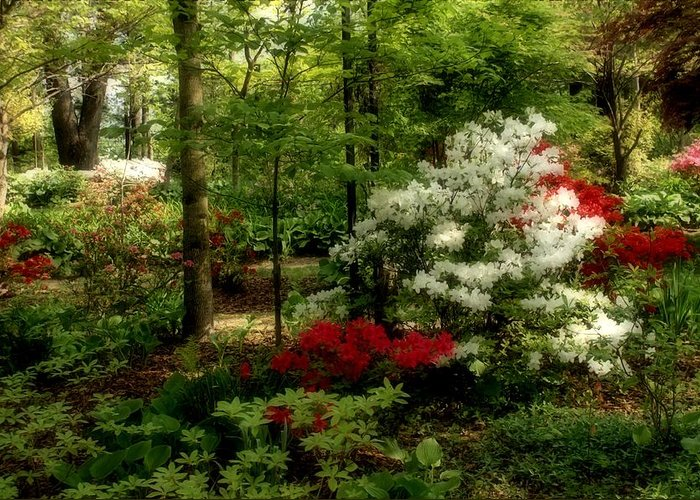 Spring Greeting Card featuring the photograph Dreaming Of Spring by Sandy Keeton