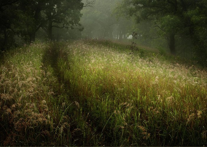 Field Greeting Card featuring the photograph Dreams Of Grass by David Jilek