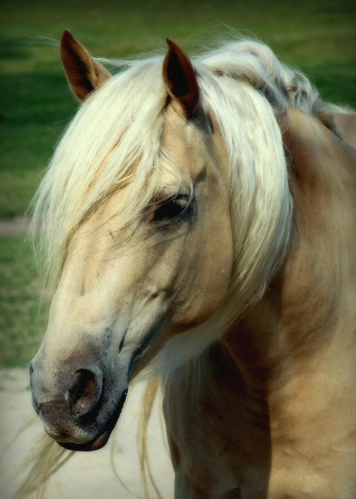 Horses Greeting Card featuring the photograph Dreams Of Honey by Karen Wiles