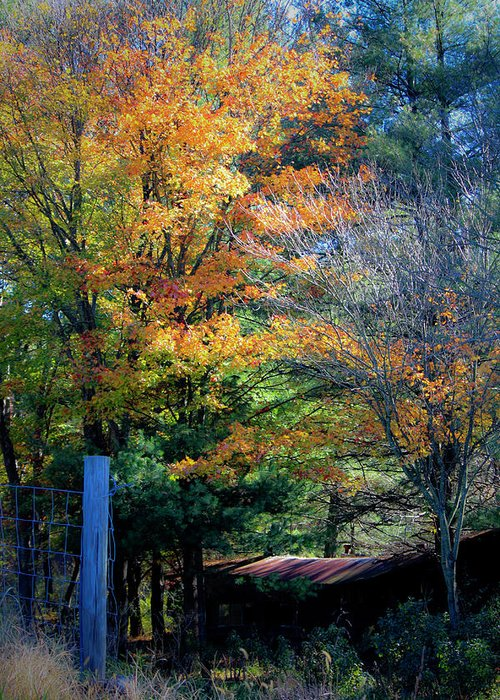 Fall Greeting Card featuring the photograph Dreamy Fall Scene by Teresa Mucha