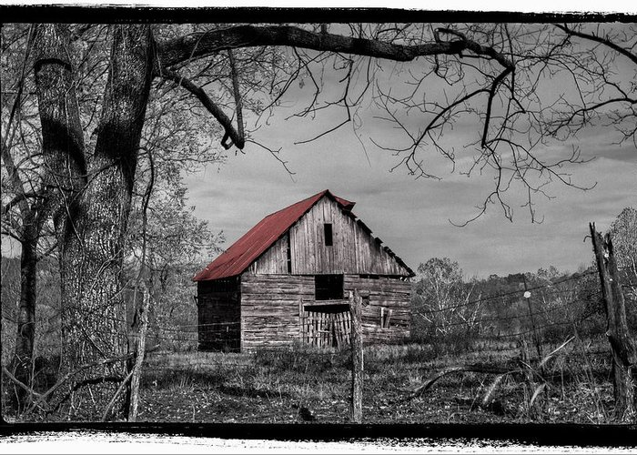 Andrews Greeting Card featuring the photograph Dressed In Red by Debra and Dave Vanderlaan