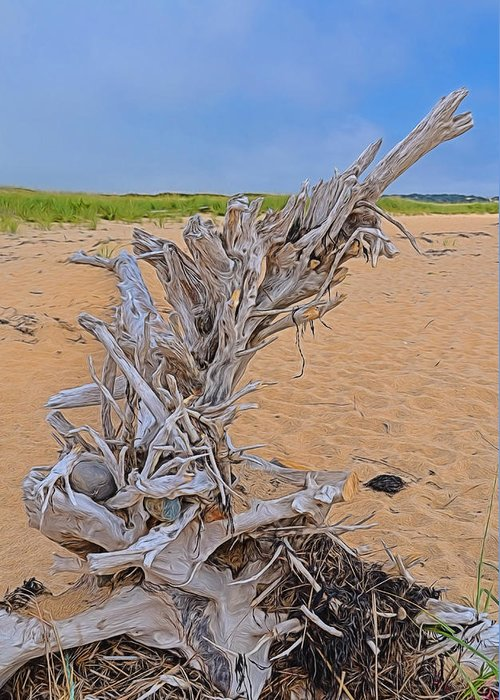 Drift Wood Greeting Card featuring the photograph Drift Wood On The Beach by Linda Pulvermacher