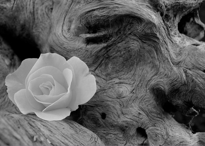 Flower Greeting Card featuring the photograph Driftwood And Roses by Michael Peychich