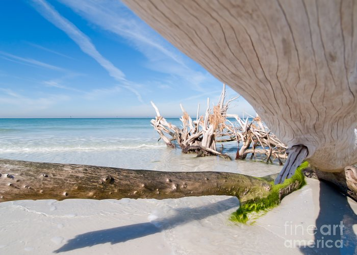 Driftwood Greeting Card featuring the photograph Driftwood C141347 by Rolf Bertram