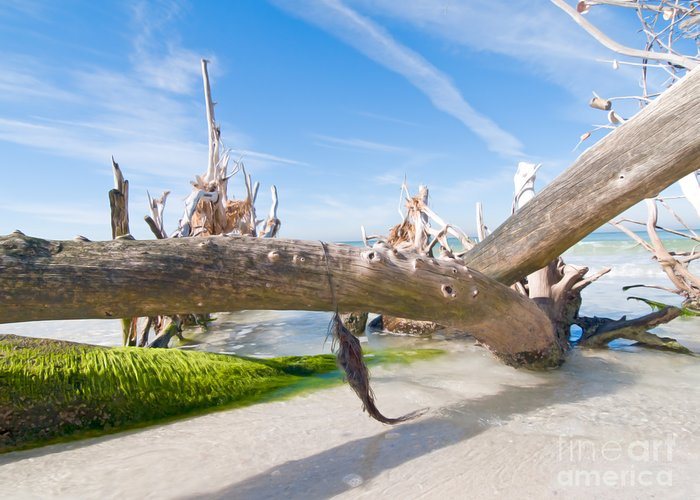 Driftwood Greeting Card featuring the photograph Driftwood C141351 by Rolf Bertram