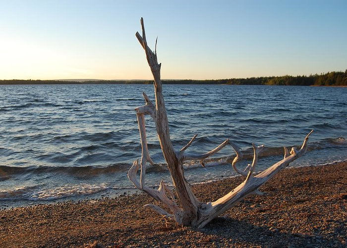 Water Greeting Card featuring the photograph Driftwood by Donald Mac Fadyen