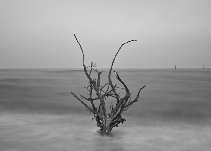 Infrared Greeting Card featuring the photograph Driftwood Infrared 64 by Rolf Bertram