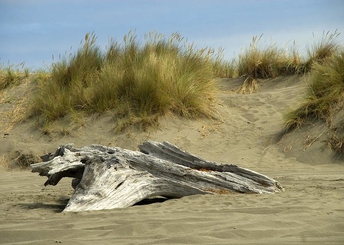 Wood Greeting Card featuring the photograph Driftwood by Jessica Wakefield